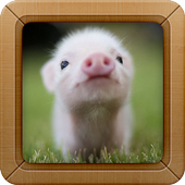 Cute Little Pig Wallpapers HD icon
