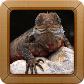Lizard Wallpapers Pictures icon