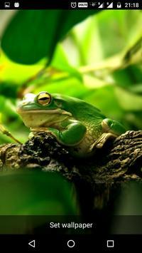 Funny Frog Live Wallpaper apk screenshot