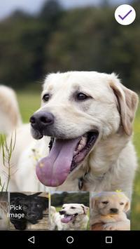 Labrador Retriever Lock Screen apk screenshot