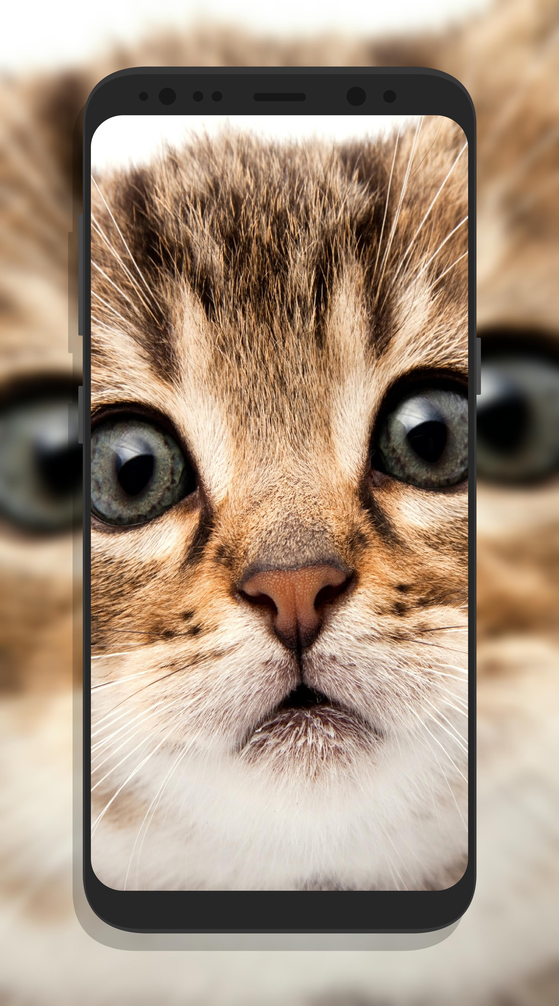 Android 用の かわいい猫壁紙 Apk をダウンロード