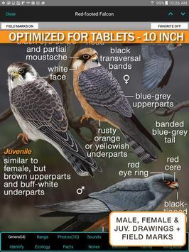iBird UK Lite Free Bird Guide apk screenshot