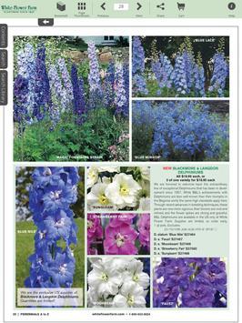 White flower farm catalogs apk white flower farm catalogs apk mightylinksfo