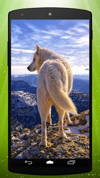 White Wolf Live Wallpaper poster