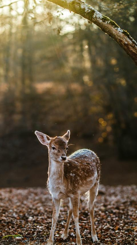Whitetail Deer Wallpaper Free For Android Apk Download