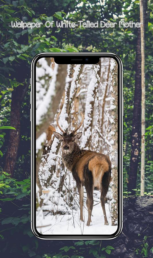 White Tailed Deer Wallpaper For Hunters For Android Apk Download