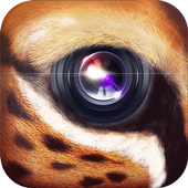 WildCam icon