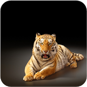 Animals Wallpapers icon