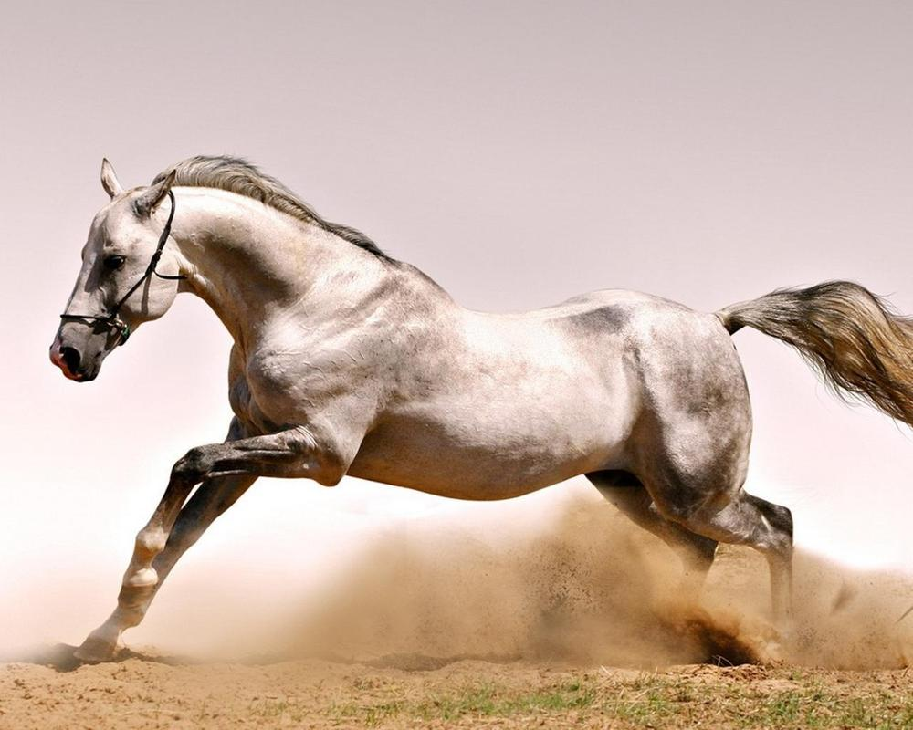 best horse wallpapers for android - apk download