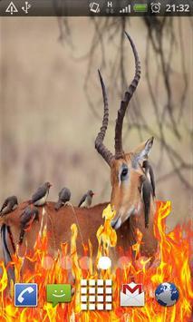 Beaytyful Animals Live Wallpap poster