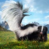 Skunk Simulator 3D icon