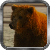 Brown Bear Live Wallpaper icon