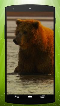 Brown Bear Live Wallpaper poster