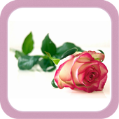 Flower HD Wallpapers icon