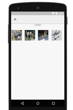 Imágenes para fondos apk screenshot