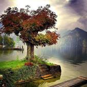 300 Free Autumn Tree Pictures icon