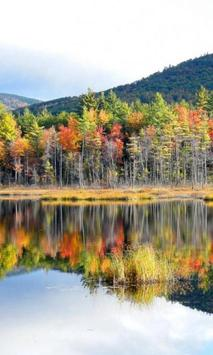 300 Free Autumn Tree Pictures poster