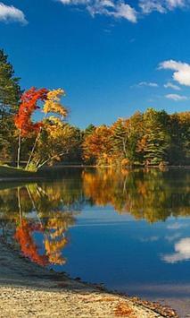 300 Free Autumn Tree Pictures apk screenshot
