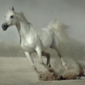 500 Amazing Horse Pictures HD icon