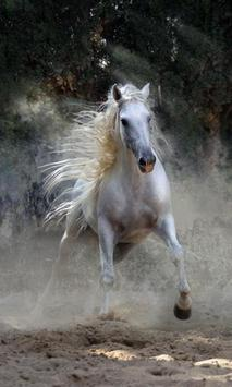 500 Amazing Horse Pictures HD poster
