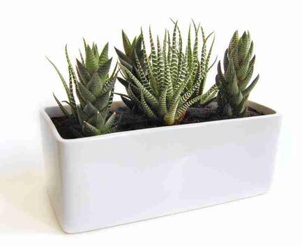 Home Planter Design Ideas screenshot 10