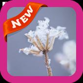 Winter Snowflakes Wallpaper icon