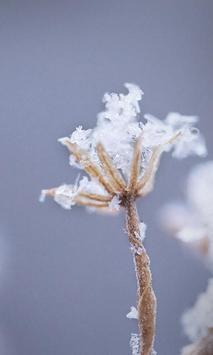 Winter Snowflakes Wallpaper screenshot 1
