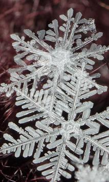 Winter Snowflakes Wallpaper screenshot 5