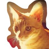 my kitten wallpaper icon