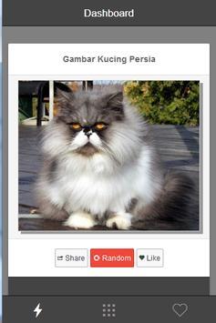Gambar Kucing Persia poster