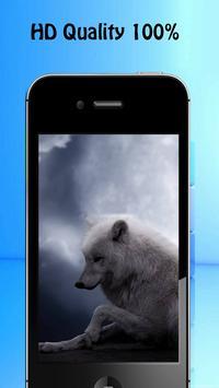 Wolf Wallpapers apk screenshot