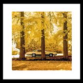 Yellow autumn wallpaper icon