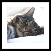 kitten nap wallpaper icon