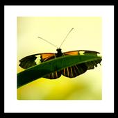 sense of spring livewallpaper icon