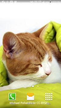 cute sleeping kitten wallpaper poster