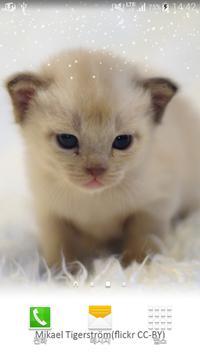 soft fur kitten apk screenshot