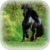 Black Horse Wallpaper icon