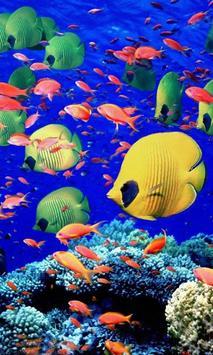 Aquarium Live Wallpapers poster