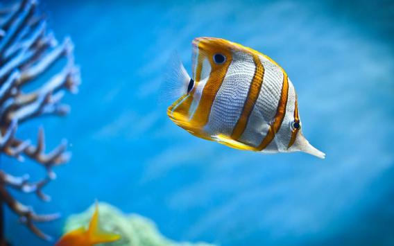 Aquarium Live Wallpapers screenshot 2