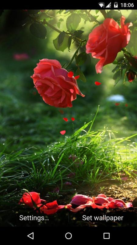 Red Rose Flower Live Wallpaper Apk Screenshot