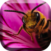 Bee and Flower Live Wallpaper icon