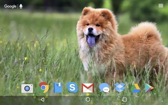 Cute Chow Chow Dog Live apk screenshot
