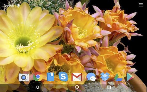 Cactus Flowers Live Wallpaper apk screenshot