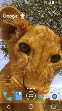 Little Lion Cub Live Wallpaper poster