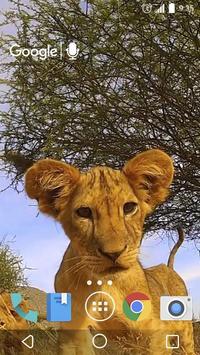 Little Lion Cub Live Wallpaper apk screenshot
