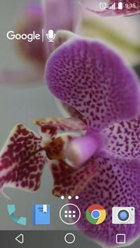 Pretty Orchids Live Wallpaper screenshot 2