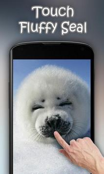 Fluffy Seal Live Wallpaper poster