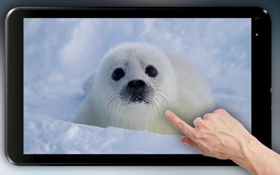 Fluffy Seal Live Wallpaper apk screenshot