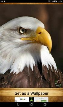 Eagle Wallpapers ( OFFLINE ) screenshot 8