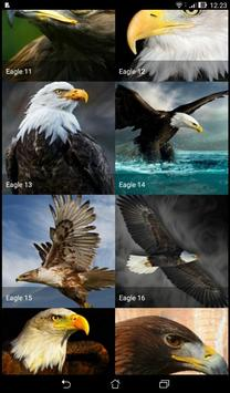 Eagle Wallpapers ( OFFLINE ) poster